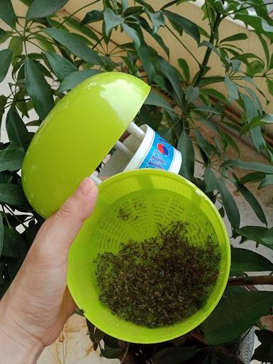Đèn bắt muỗi Swonsan